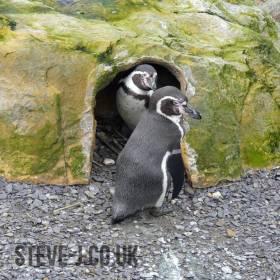 Penguins Home